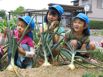 野菜の収穫(年長年中組)